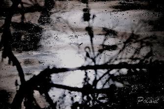 grésil sous la lune-pf_100DSC_109.jpg